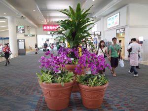 Okinawaa6_2