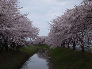 Isanuma201104d