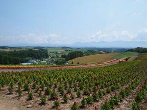 Hokkaido2011h
