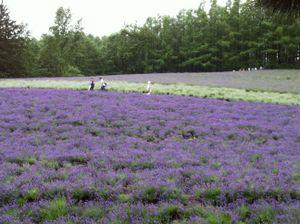Hokkaido2011m