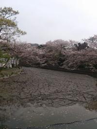Miyaji201304b