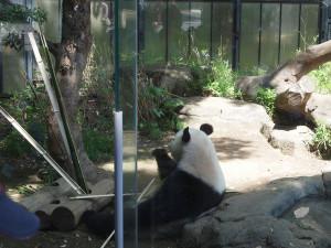 Panda201305