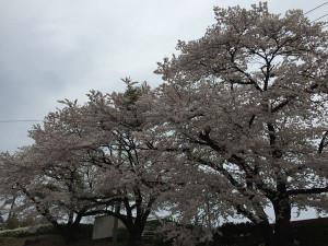 Ikaho201504a