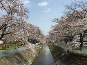 Sakura202003b_20200322222601