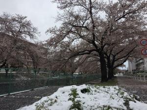 Sakura202003c